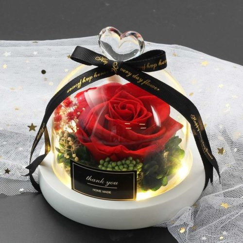 Rose éternelle rouge sous un dôme lumineux , socle blanc