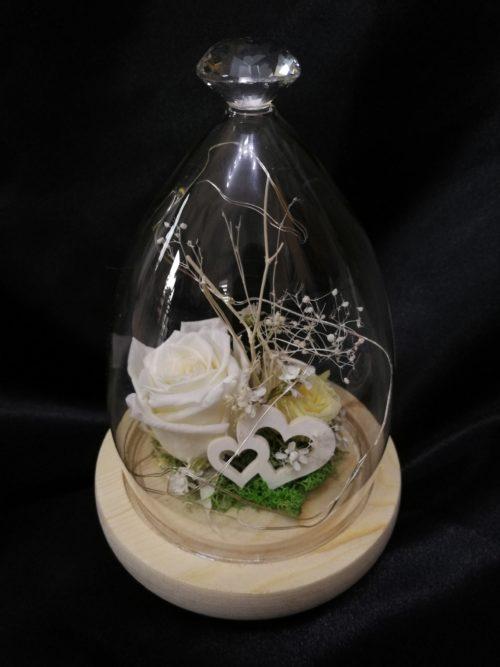 Rose éternelle blanche, sous cloche pointu